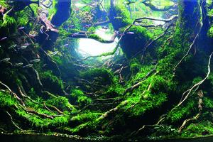 Aquascapers Are Creating Miniature Atlantean Fantasy Worlds