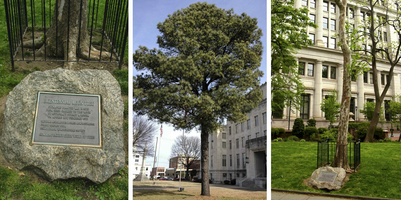 Whatever Happened to All the Moon Trees? - Atlas Obscura