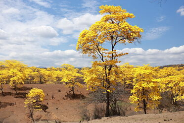 This desert-like landscape is covered with yellow flowers for only a few days a year.
