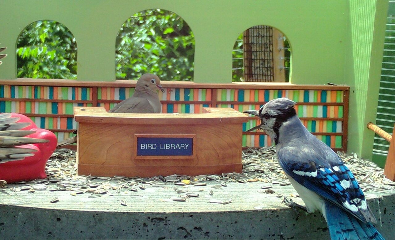 <em>Shh!</em> This is a library!