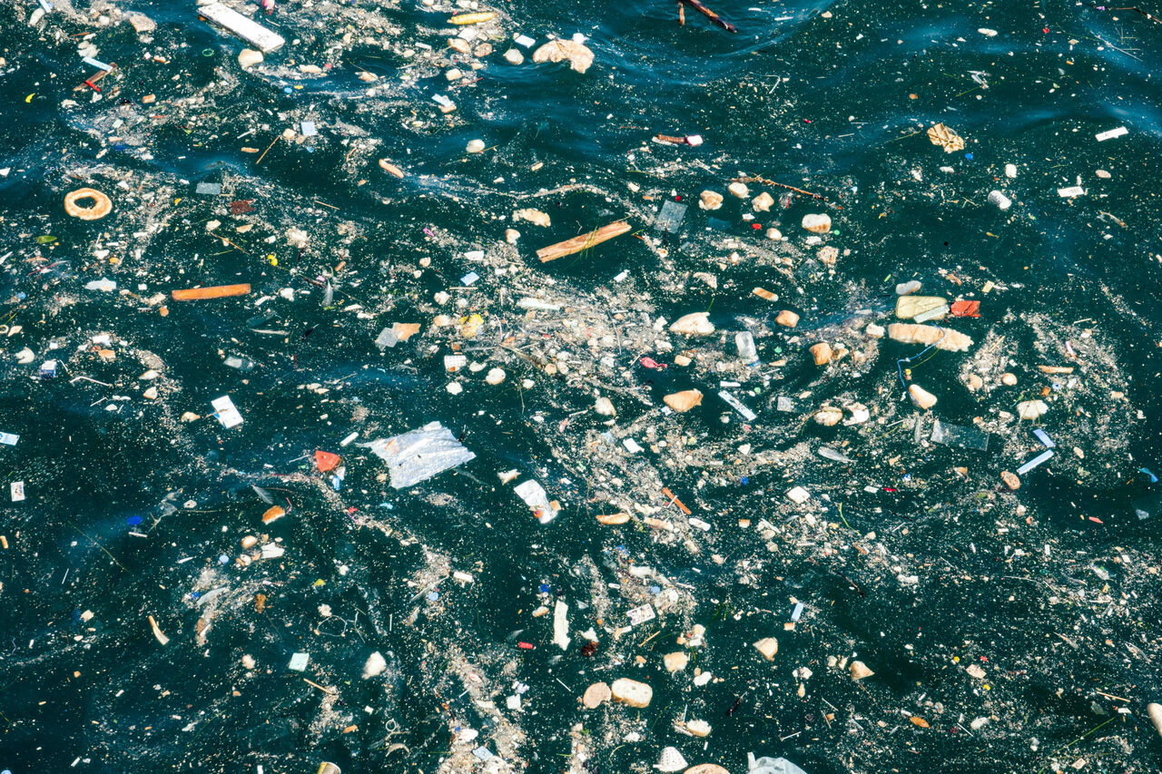 Plastics appear in water and on shorelines all over the world. Microplastics—shards less than five millimeters long—are even turning up in the cases that some aquatic larvae make to protect themselves.