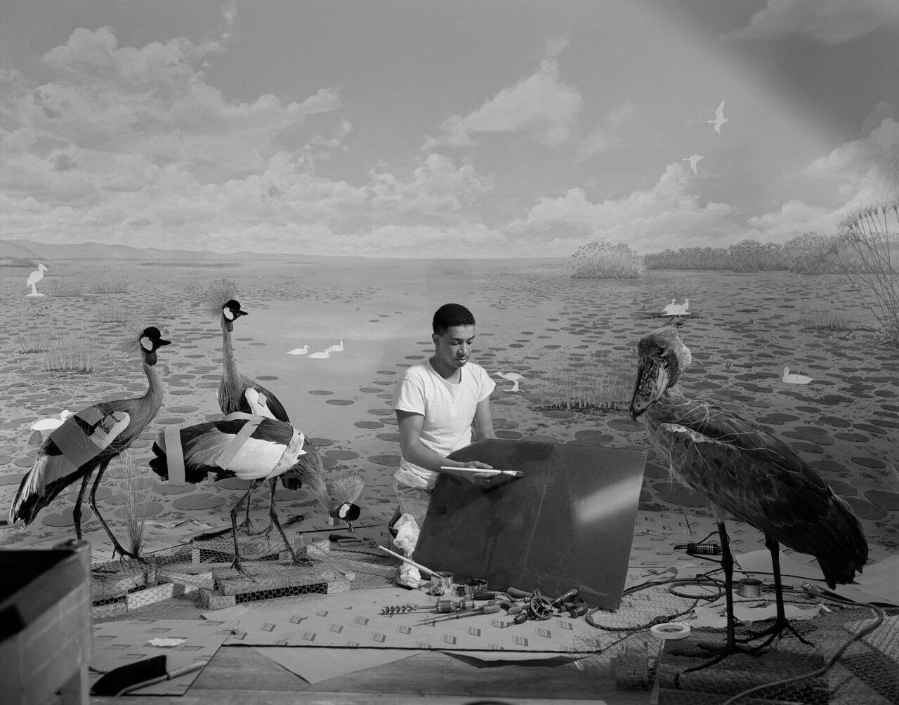 The taxidermist Carl Cotton prepares a diorama of birds in the Upper Nile.