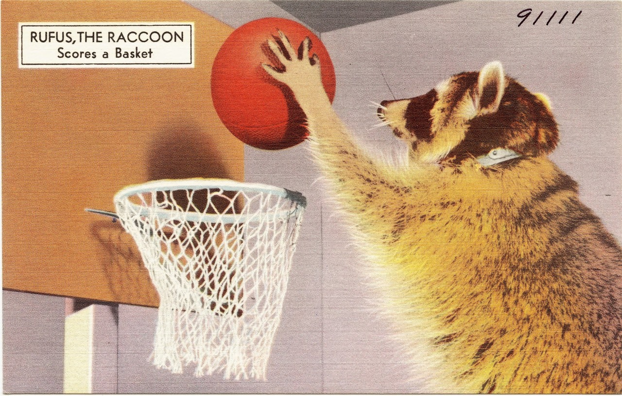 """Rufus the Raccoon scores a basket"" vintage postcard."