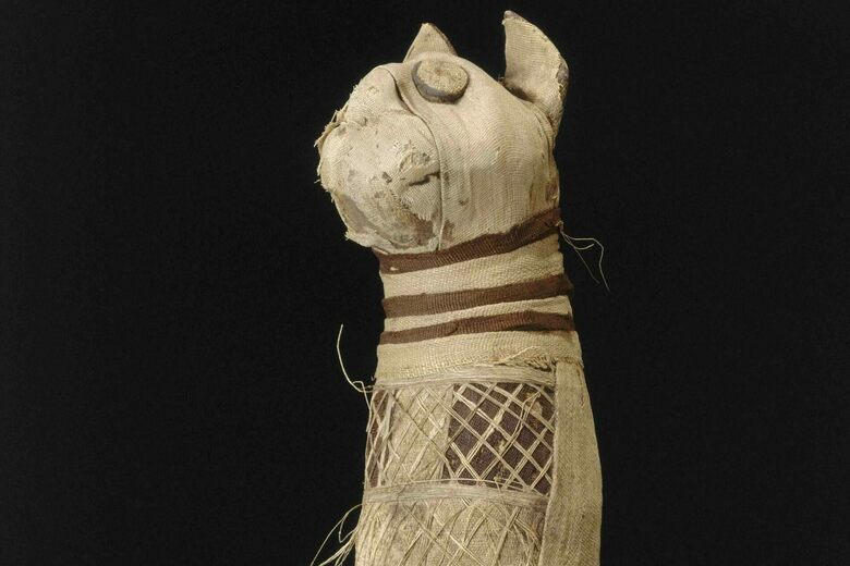 This Five-Legged Cat Mummy Is Not as Strange as It Seems