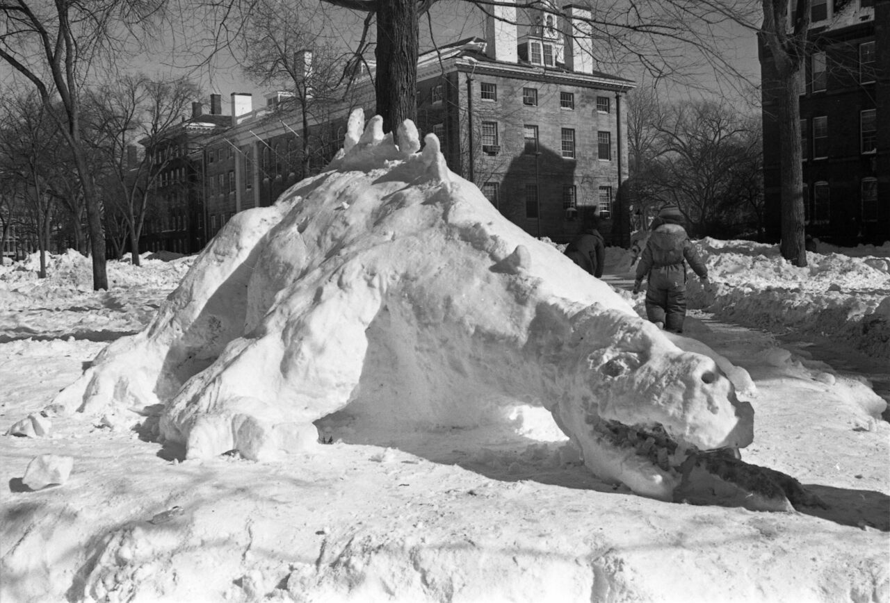 This creature, birthed in Cambridge's Harvard Yard after a blizzard in 1978, isn't it.