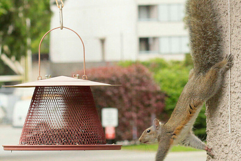 Is A Squirrel Smarter Than A Fifth-Grader? - Atlas Obscura