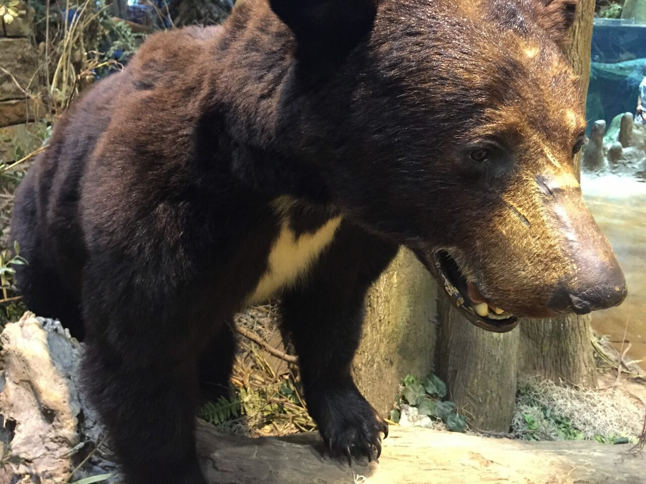 A stuffed black bear that is not Cocaine Bear, but likely resembles him.