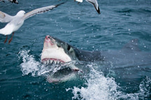 Sharks Have a Sixth Sense and It is Terrifying