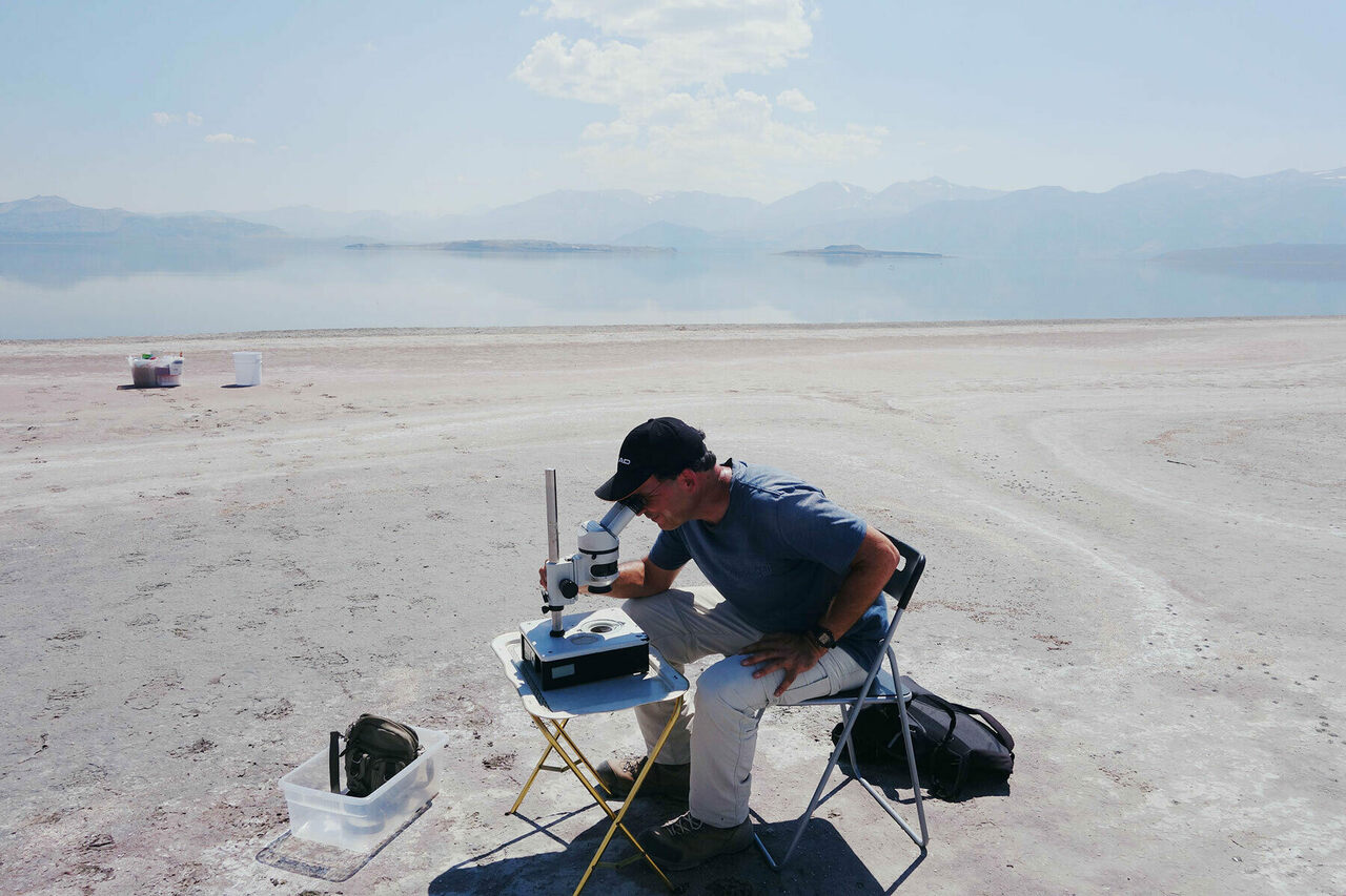 Extremophile expert Amir Sapir checking out some nematodes at Mono Lake.