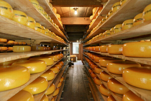 For Sale: 500 Pounds of 20-Year-Old Cheddar