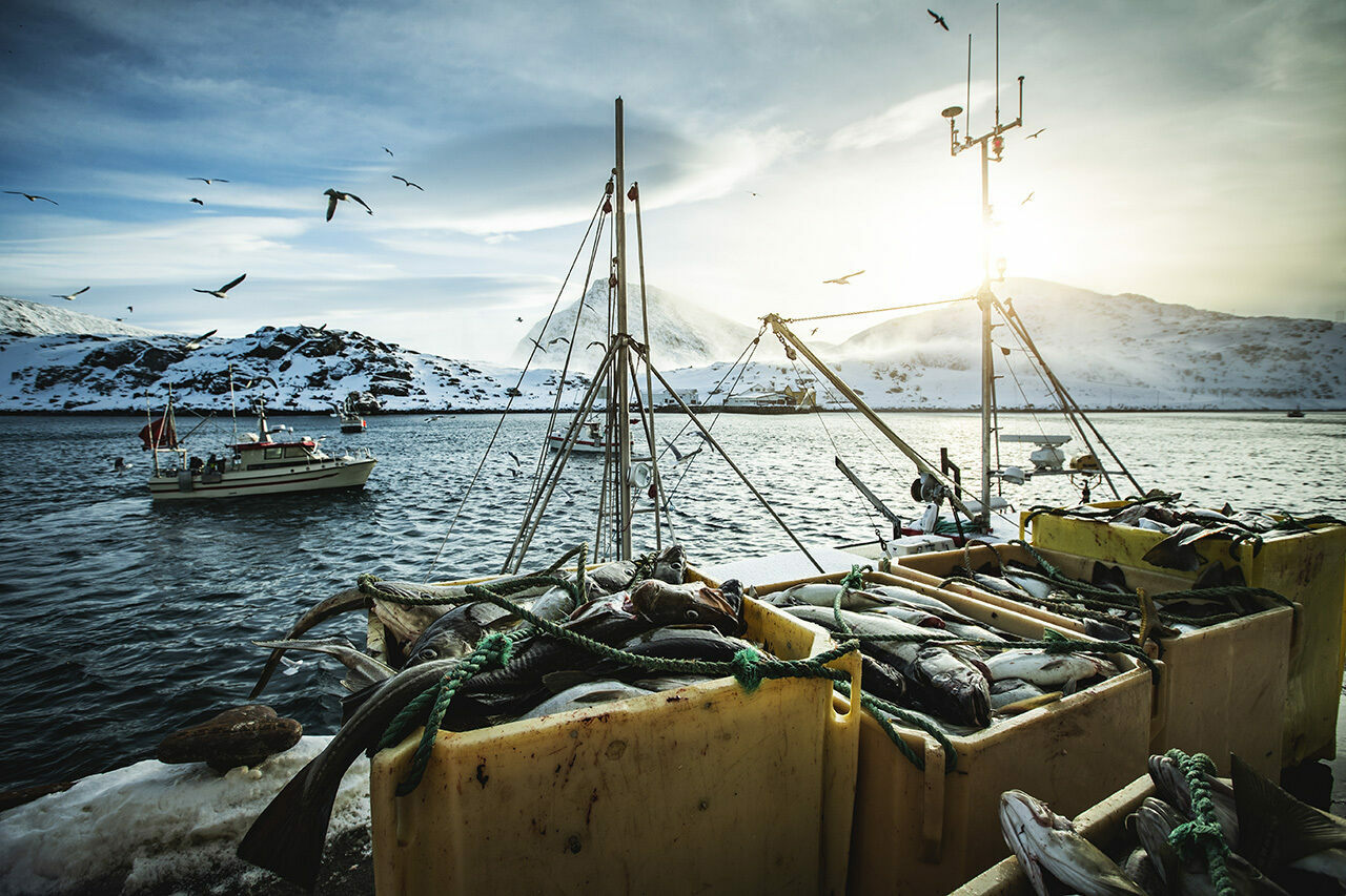 Here's the catch: Dried cod is Norway's oldest export industry.