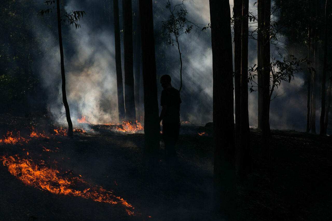"""Cultural burners creates low, """"cool"""" flames that clear underbrush while leaving treetops intact."""