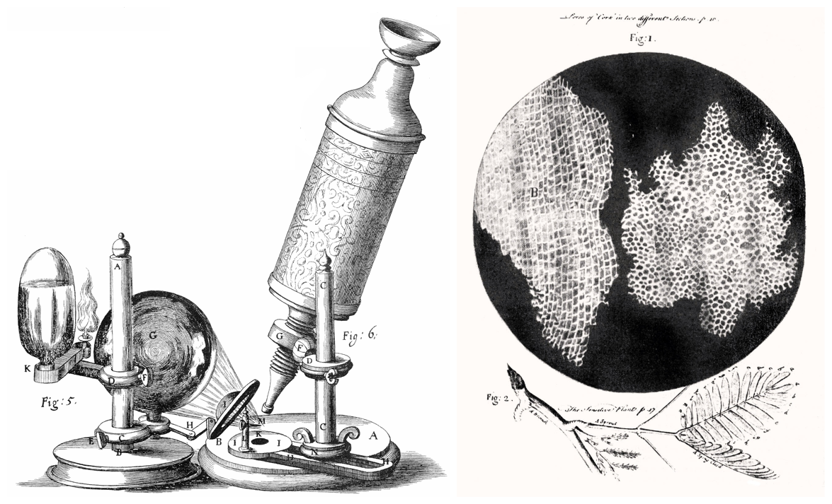 An illustration of Robert Hooke's microscope (left); an illustration of cork cells from his 1665 text <em>Microscopia</em> (right).