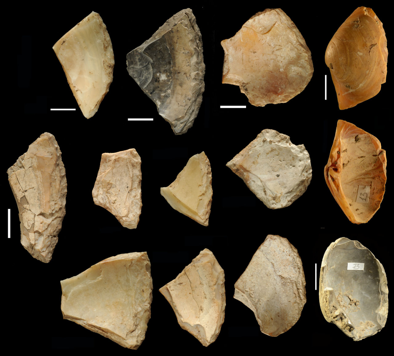 Shell game: Neanderthals likely found these cutting tools beneath the waves.