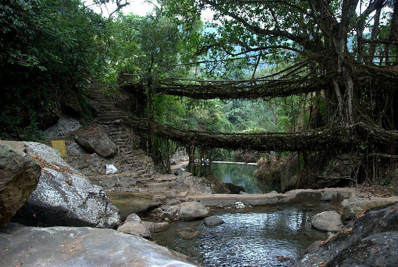 A double-decker root bridge in Meghalaya.
