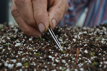 Transplanting blueberry seedlings at the University of Florida.