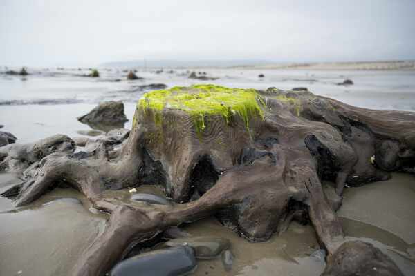 The Ancient, Sunken Forest That Rises From a Welsh Beach