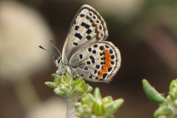 5e954b518 El Segundo Butterfly Preserve: An Airport Ghost Town Turned Rare Wildlife  Refuge
