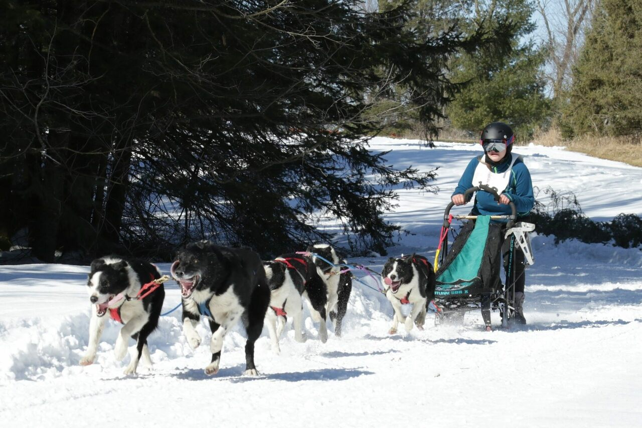 Tabetha Kopta and her border collies compete—and place—in sprint-distance dogsledding events.