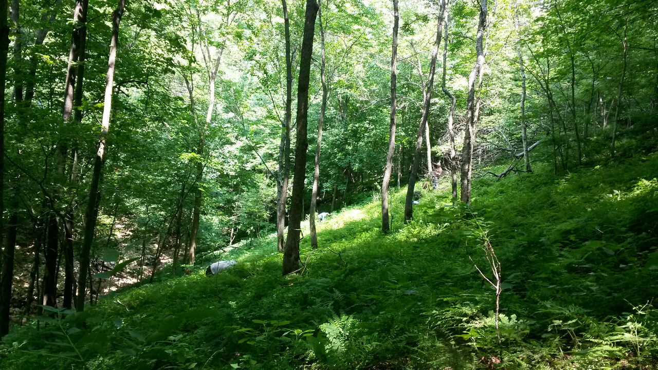 """A researcher on hands and knees surveys the rare flora and fauna on a """"breathing hill"""" in the Upper Midwest's Driftless."""