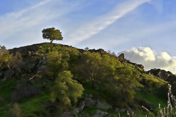 Found: 2.6 Trillion Trees