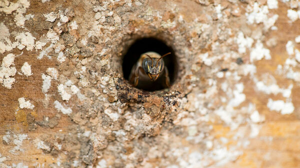 The Protector of Mexico's Hidden Hives of Stingless Bees