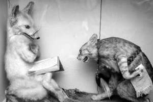 Anthropomorphic Taxidermy: How Dead Rodents Became the Darlings of the Victorian Elite