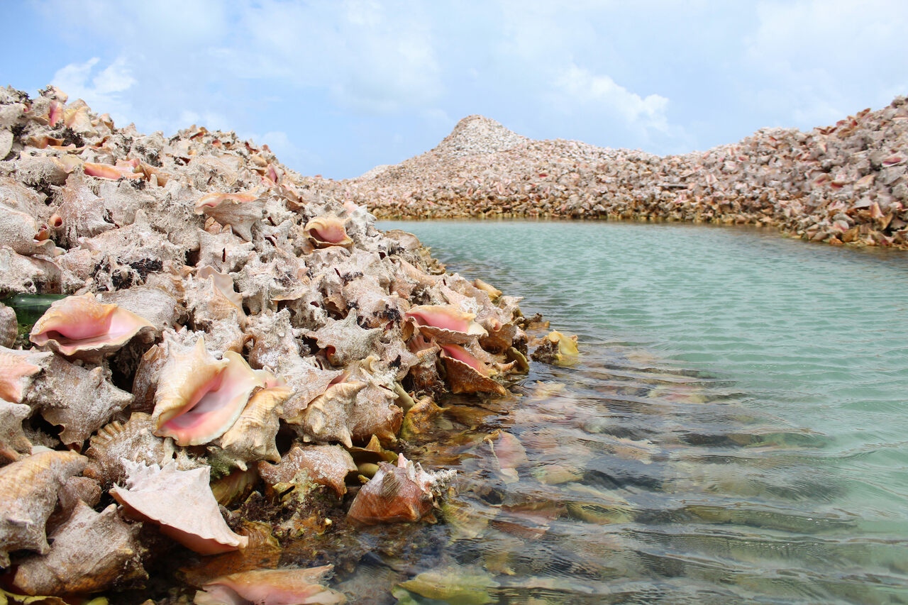 There's a Massive Conch-Shell Graveyard in the Caribbean - Atlas Obscura