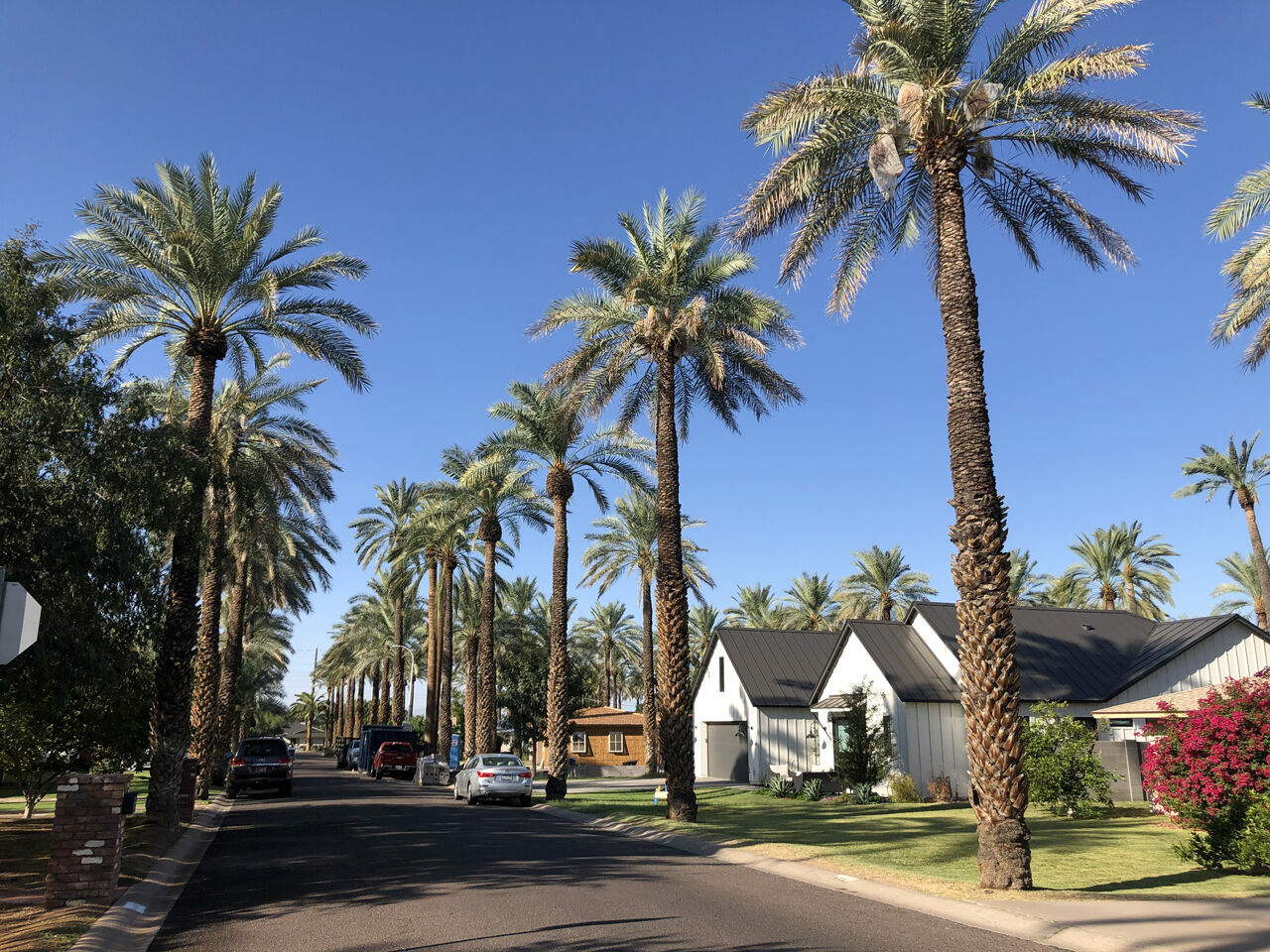 The towering date palms of Mountgrove pre-date the neighborhood.