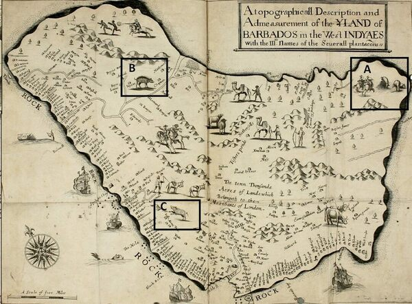 Solved: The 300-Year-Old Mystery of Barbados's Pigs