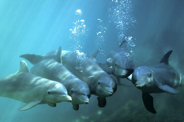 A group of dolphins off the coast of Mexico.