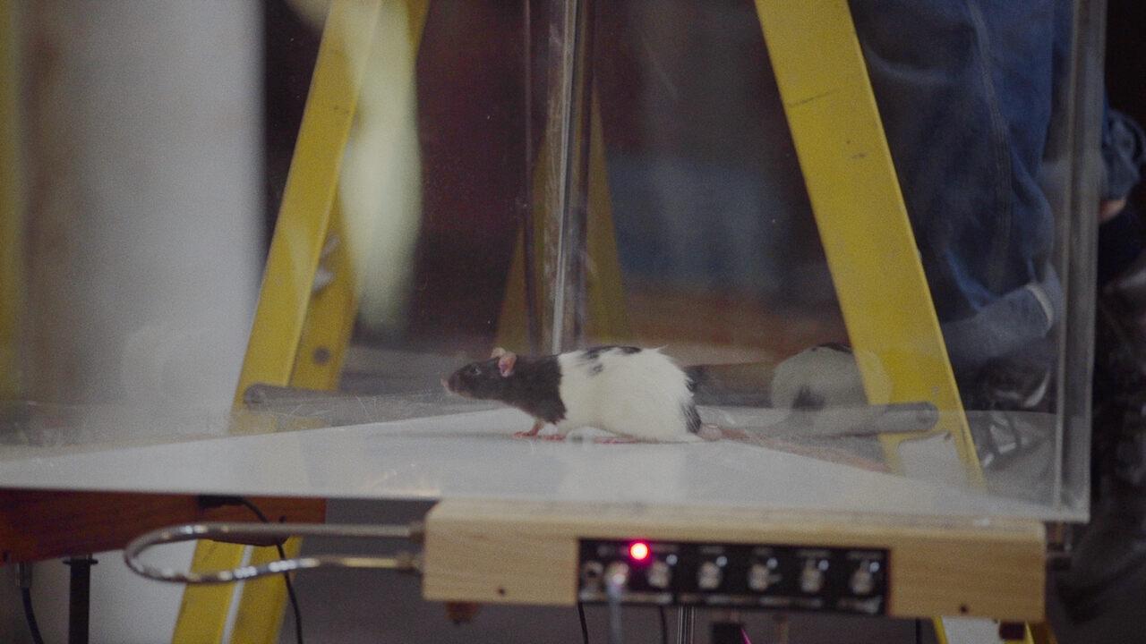 A rat explores his new creative potential.