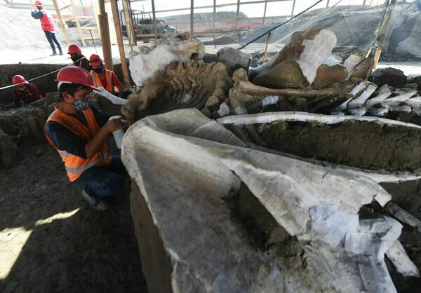 The Fate of the World's Largest Mammoth Trove