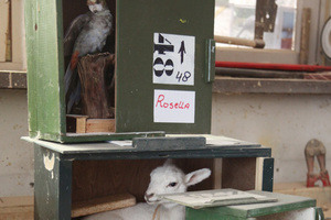 From a Jar of Moles to Robot Convicts, A Visit to Five Offbeat Taxidermy Destinations