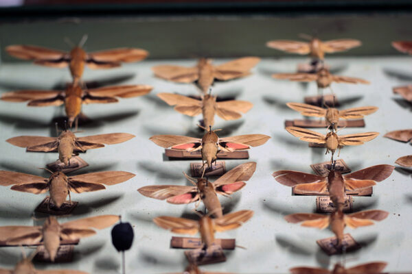 Inside the Hidden Natural History Museum of Mumbai