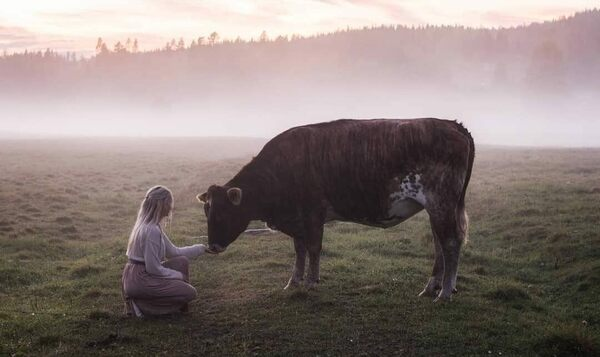 The Spellbinding Swedish Song That Calls Cows Home