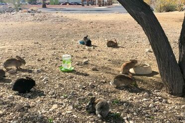 Bunnies at the dump site back in January.