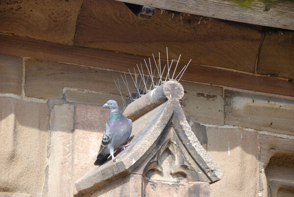 what pigeon spikes can teach us about people atlas obscura. Black Bedroom Furniture Sets. Home Design Ideas