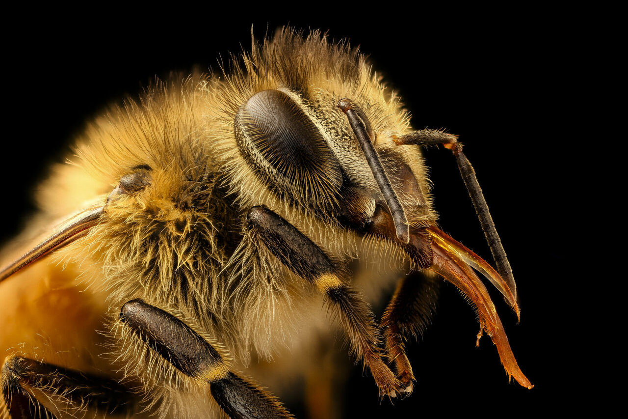 A single pound of honey is the lifetime work for about 768 bees, made up of visits to two million flowers.