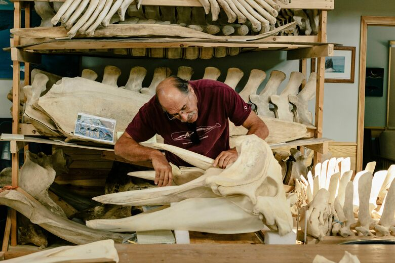 How Whopping Whale Skeletons Come to Life at 'Bonehenge'
