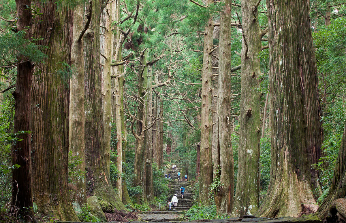 Ancient cryptomeria cedar trees line both sides of the Daimonzaka trail.