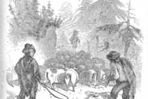 The Great Appalachian Hog Drives