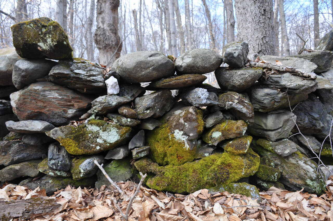 Stone wall, with moss, Putney, Vermont.