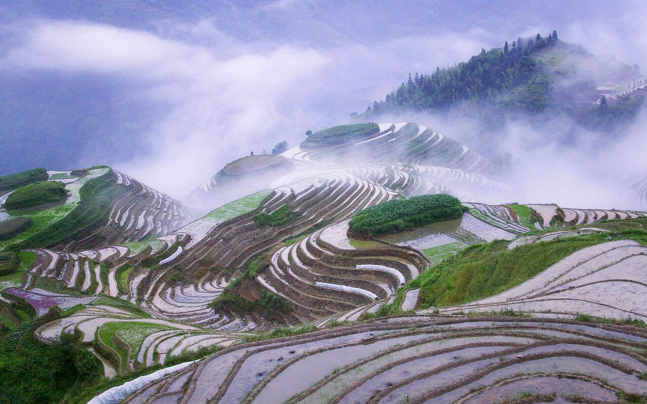 Rice terraces in China's Guangxi Province.