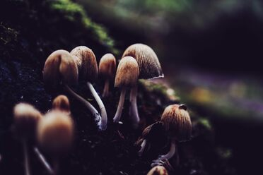 If humans go extinct, mushrooms may rule the world.