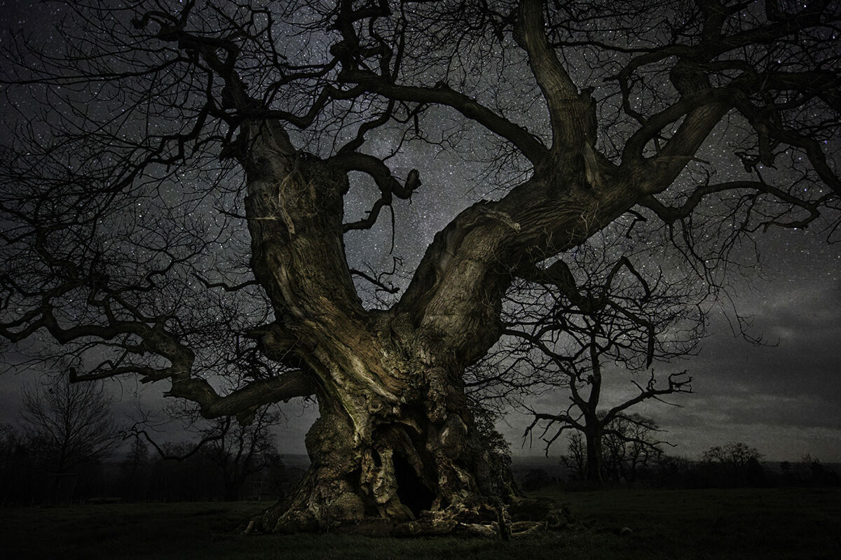 Breathtaking Photos of Ancient Trees Against Starry Skies