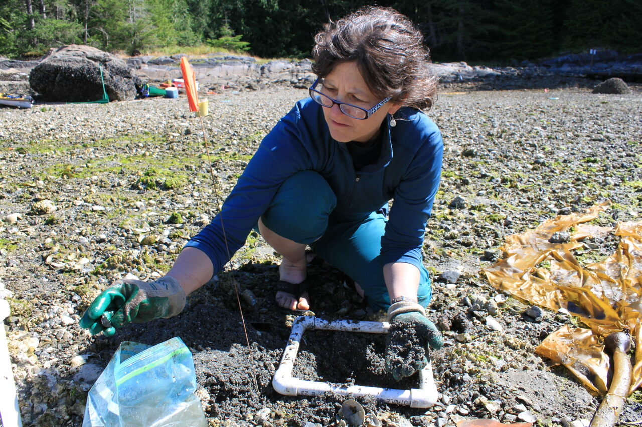 Dana Lepofsky examines clam shells at an archaeological site.