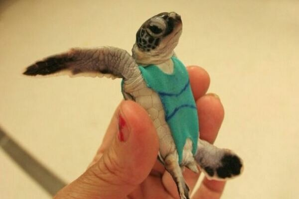 The 2015 Sea Turtle Swimsuit Collection