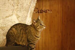 The Cats That Got the Crème at Le Café Des Chats, the Paris Cat Cafe
