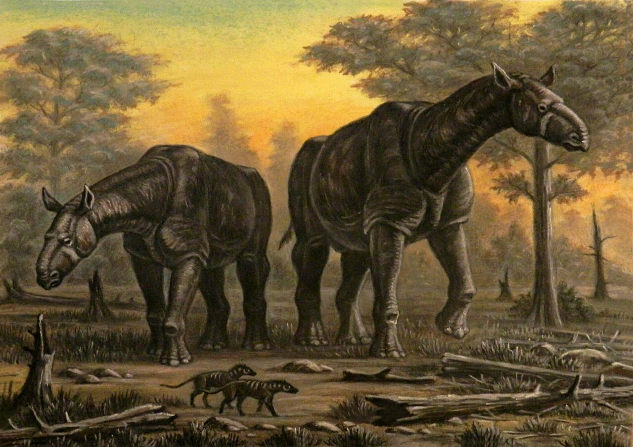 <em>Paraceratherium</em> is often described as the largest land mammal ever to have lived.